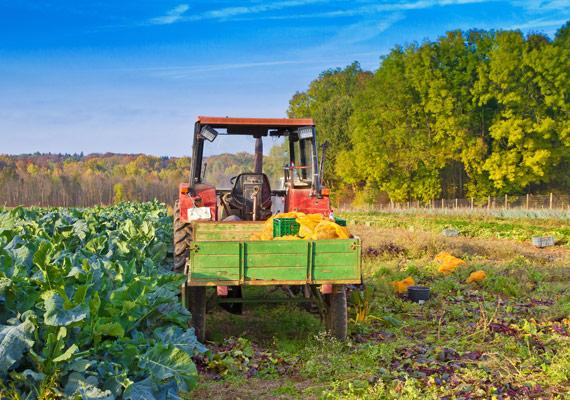 Traktor von regionalem MENÜPLAN Lieferant für frische Convenience Produkte